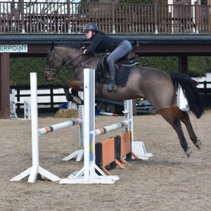 Show jumping pre-competition training
