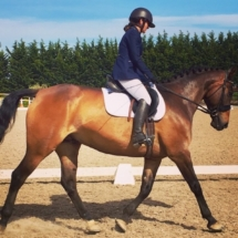 Horse_Dressage_Training