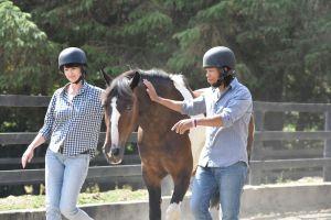 Team Building Corporate Training Horse Riding