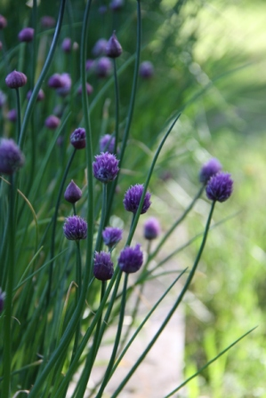 Herbs 01