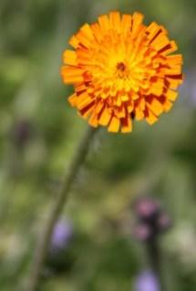 Wildflower Centre 01