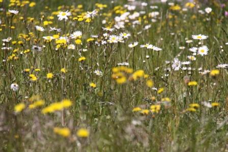 Wildflower Centre 07