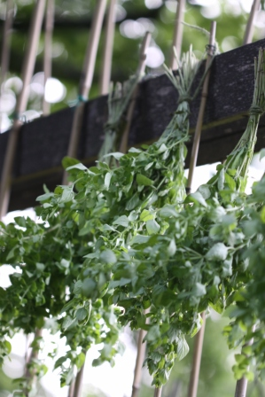 Drying Herbs 02