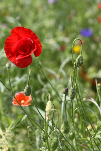 Wildflower Meadow 02