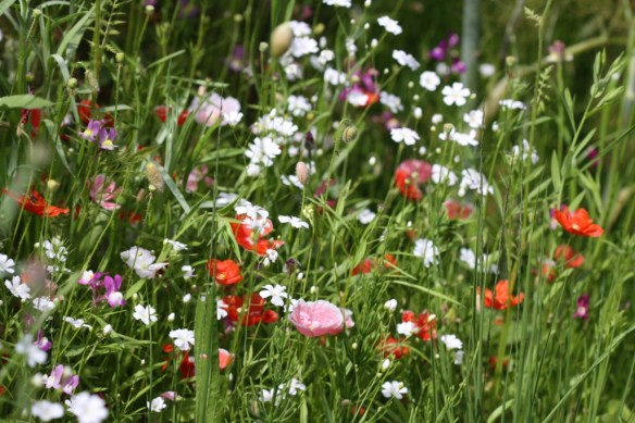 Wildflower Meadow 03