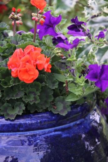 Geranium and Petunias