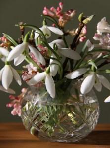 January Flowers 01