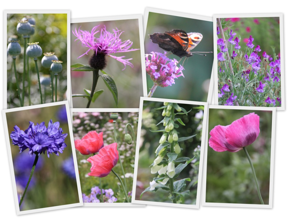 Country-Garden-UK-Collage