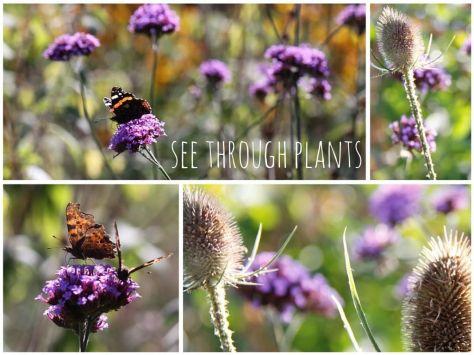 See Through Plants Web