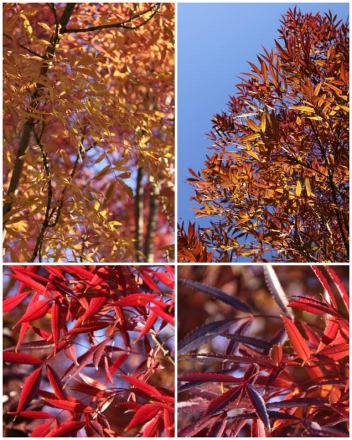 Autumn-Tree-Collage