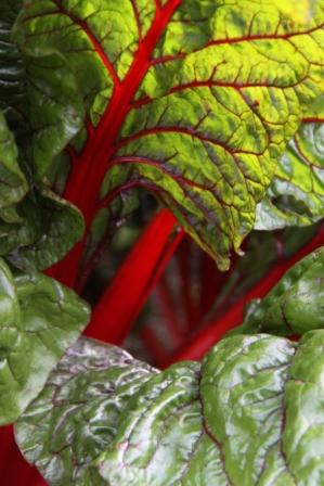 veg garden 027