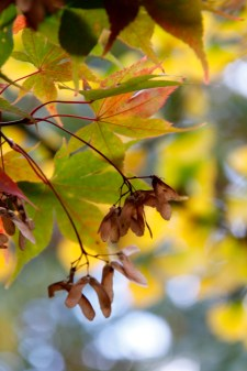 acers 036