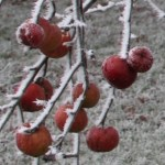 Frosty-Apples-Thumbnail