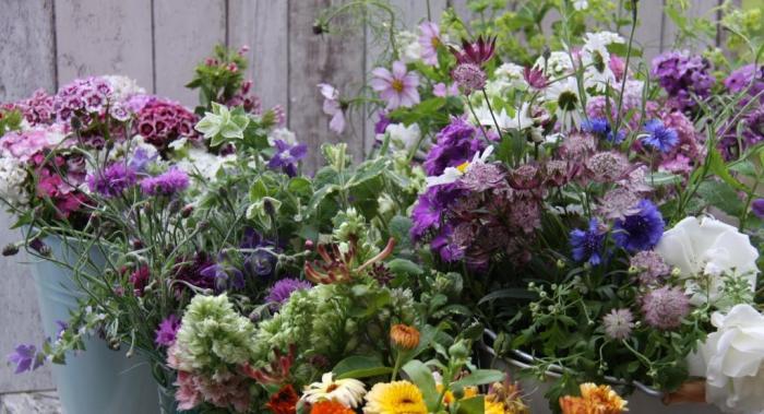Country-Garden-Flowers-June