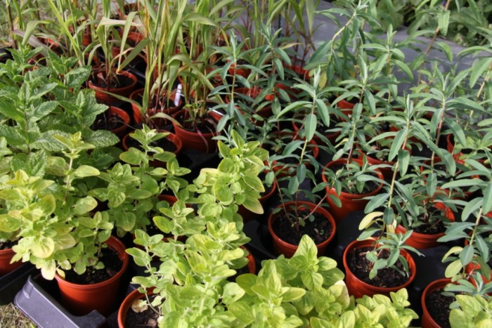 Foliage-for-Planting-now