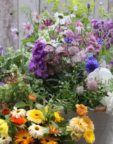 June-Cut-Flowers
