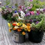 June-Flowers