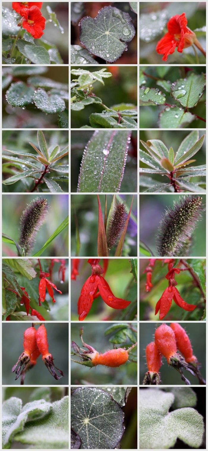 Hints-of-Autumn