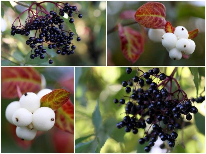 Black-&-White-Fruit