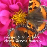 butterflies-and-dahlia