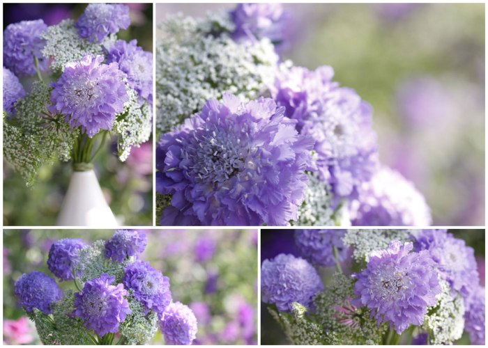 Scabious-collage