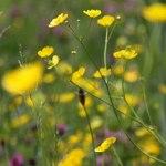 wildflower-meadow-300