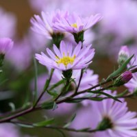 Top Five Flowers for Autumn