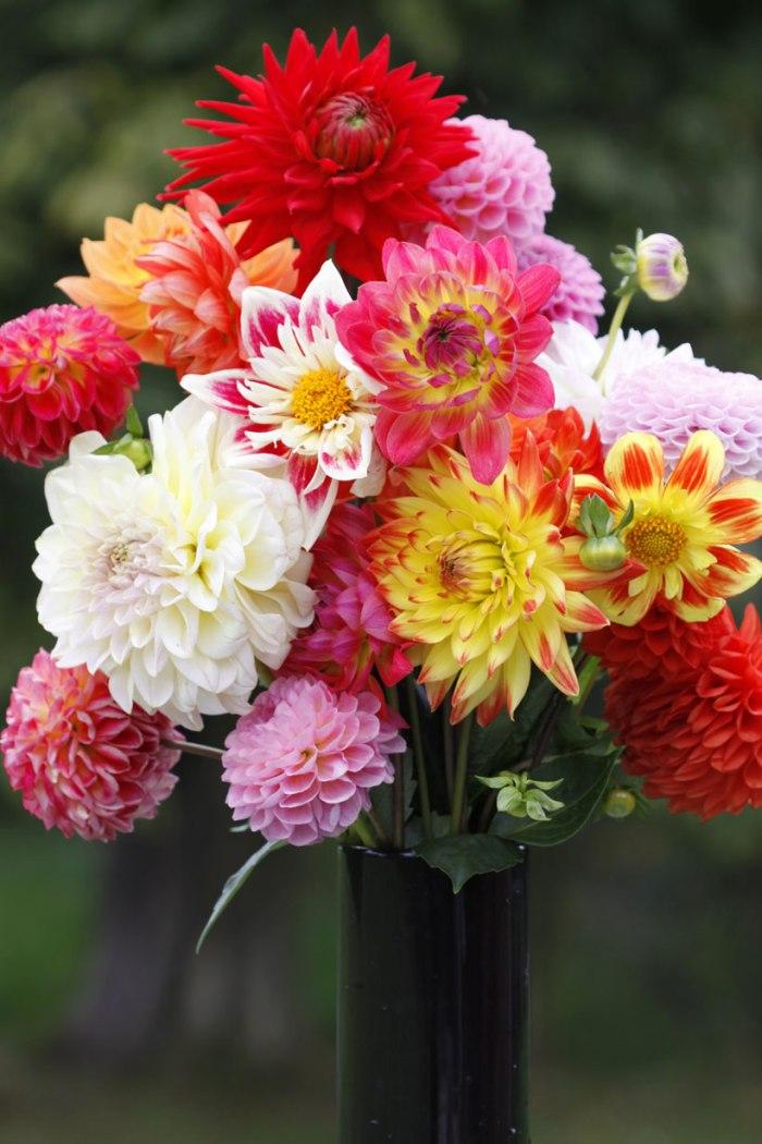 Dahlias-Vase