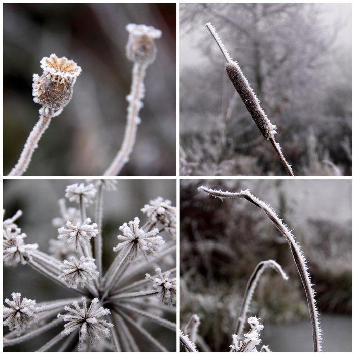 Frozen-Plants-Collage
