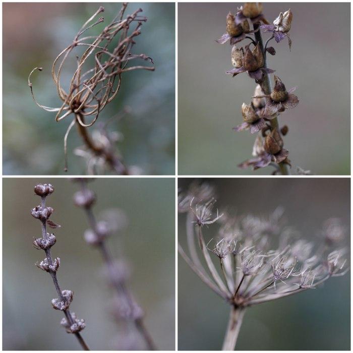 December-Seedheads