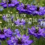 Free-Seeds-Widget