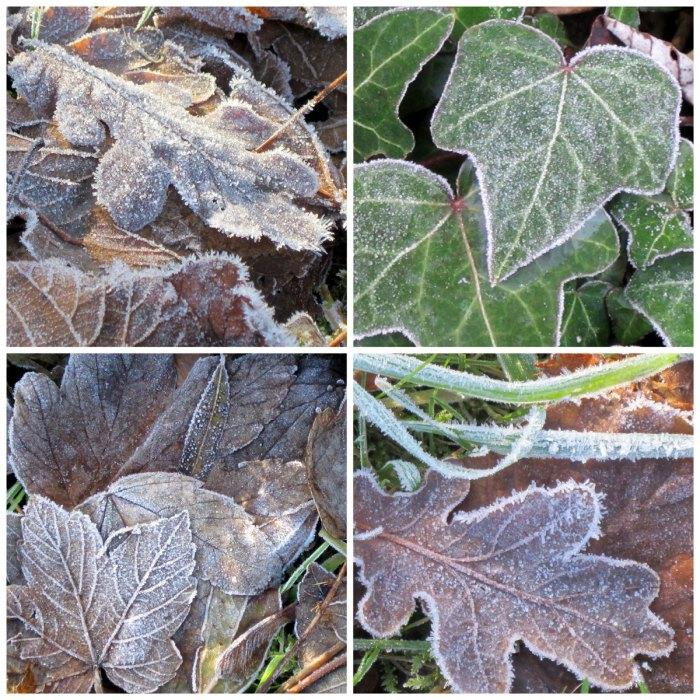 Frozen-Leaves