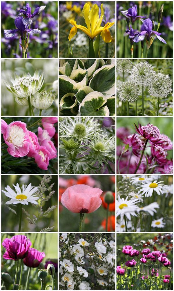 June-Iris&Poppy-Collage