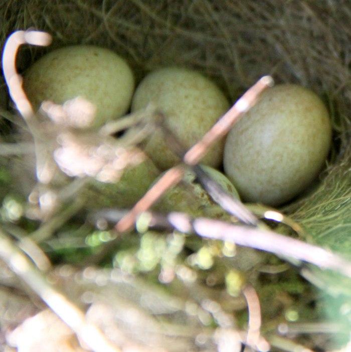 Wrens-Nest
