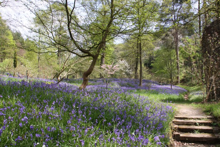 Bluebell-Wood-Gresgarth