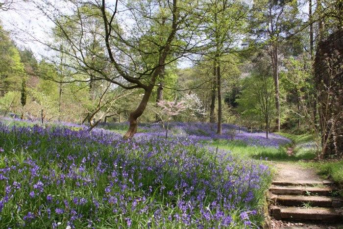 Bluebell-Wood-Gresgarth