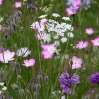 Grow Wildflowers from Seed