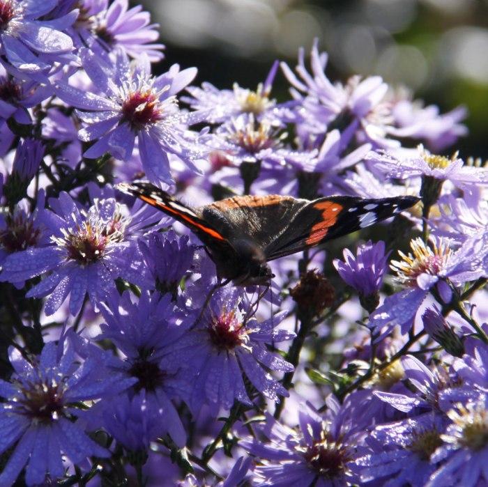 little-carlowwith-butterfly
