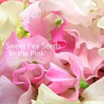 in-the-pink-seeds
