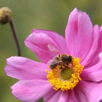 Feeding A Bee