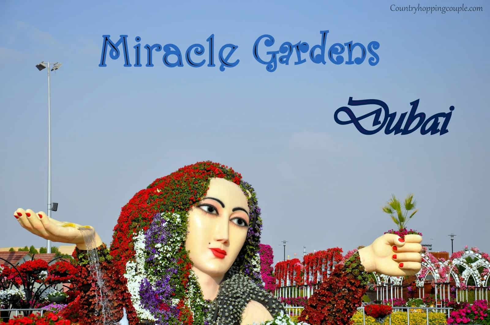 Photo Essay: Miracle Gardens, #Dubai (plus a video tour)