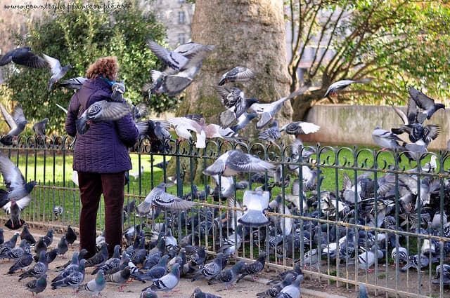 Photo Of The Week: Pigeon Woman, Paris