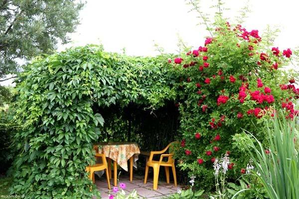 Вьющиеся растения для дачи многолетние и однолетние фото и названия видео