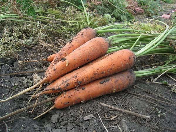 Cum să folosiți morcovii pentru a pierde în greutate?