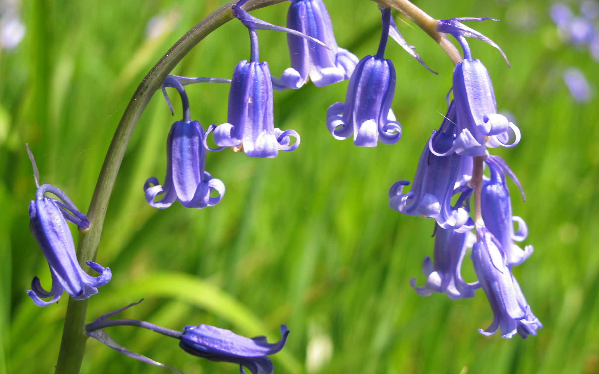The best places to see bluebells in the UK