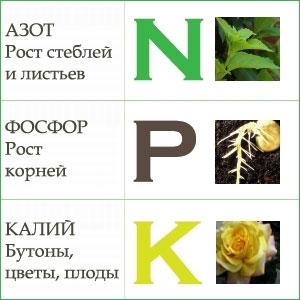 Удобрения азотные, калийные и фосфорные. Какие удобрения вносить