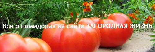 Томаты: фото, описание, сорта, отзывы, выращивание в теплице и открытом грунте. Рецепты из помидоров на сайте ЗАГОРОДНАЯ ЖИЗНЬ