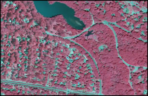 Color-infrared Aerial Imagery (1 meter)