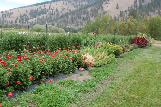 flowers in bg 1
