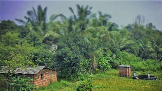 Perfect countryside scene at Thivim